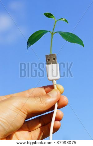handing holding a tree growing on a usb cable / green IT / go green