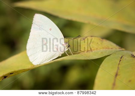 White beautiful butterfly on green leaves