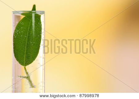 Green leaf in test tube on light blurred background