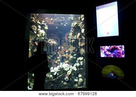 Anemone display tank