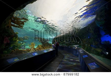 Shark tank Ripleys Aquarium