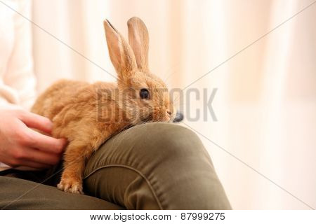 Woman holding little cute rabbit on light background