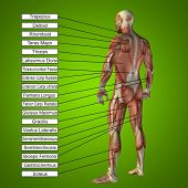foto of male body anatomy  - Concept or conceptual 3D male or human anatomy - JPG
