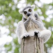 picture of meerkats  - Wild meerkats  - JPG