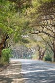 pic of canopy  - Tree canopy in Mandalay Myanmar - JPG
