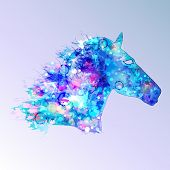 picture of paint horse  - Textured horse - JPG