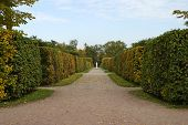 stock photo of tsarskoe  - View of a passage that comes through a hedge maze  - JPG
