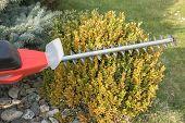 stock photo of electric trimmer  - Gardening  - JPG
