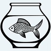 image of fishbowl  - Fish in aquarium - JPG