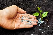 pic of fertilizer  - a hand giving fertilizer to a young plant - JPG