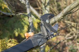 picture of prunes  - Gardening - Closeup view of pruning tree by special gardening equipment - pruning stik. Detailed view of the knife embracing a tree branch. ** Note: Shallow depth of field - JPG