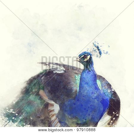 Digital Painting Of Indian Peafowl