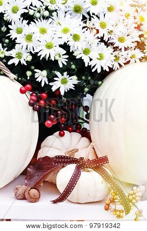 White Chrysanthemums And Pumpkins