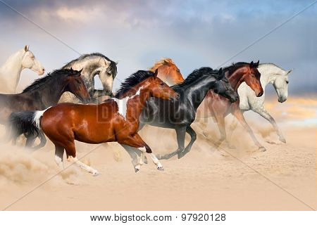 Horse herd