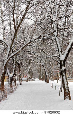 Winter Cityscape. Snowfall