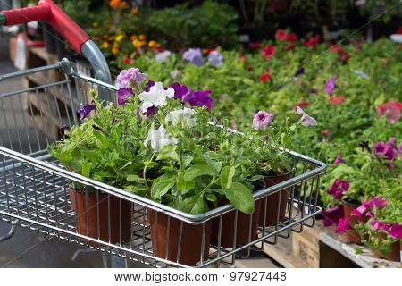 seedlings of flowers in a shopping cart