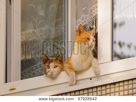 two cats sit on the window.