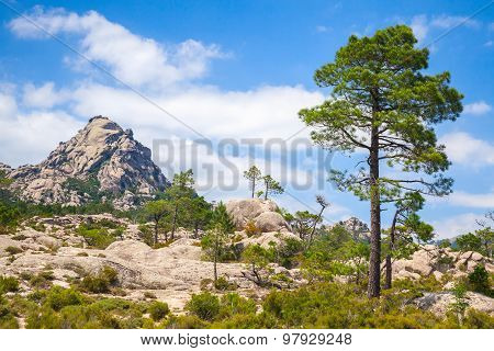Mountain Landscape With Pine Tree Under Sky