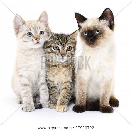 Three Small Kittens