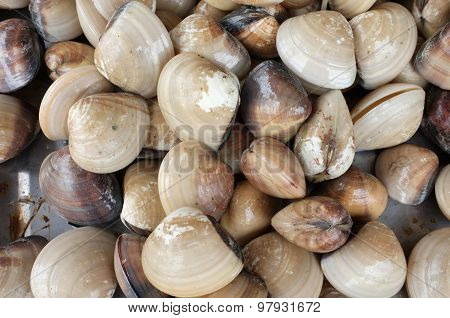 Raw and fresh clams