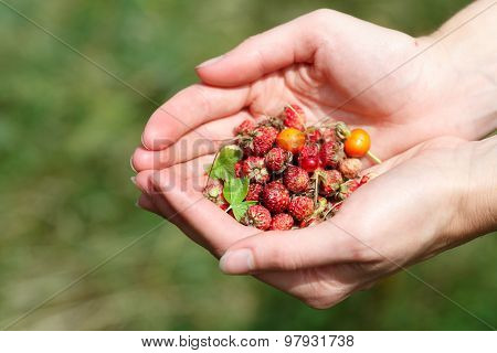 Handful Of Wildberries