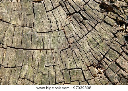 Sawn tree trunk background
