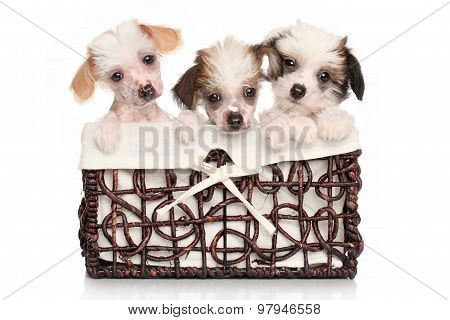 Chinese Crested Puppies In Basket