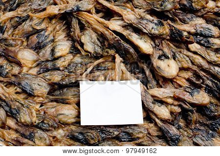 Shellfish : Angle's Wing, Oriental Angel's Wing,pholas Orientalis