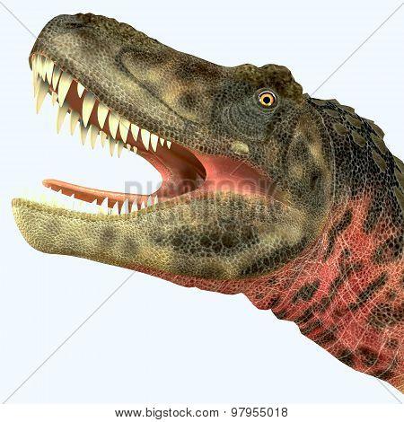 Tarbosaurus Dinosaur Head