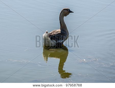 Goose On The River