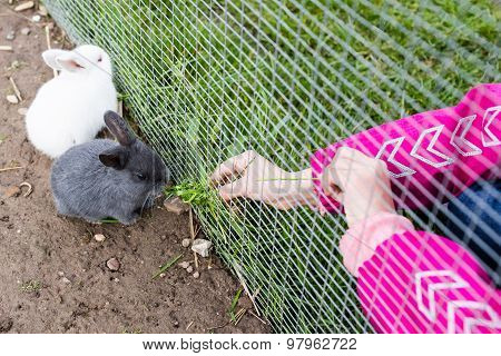 Young Child Feeding Rabbit With Food