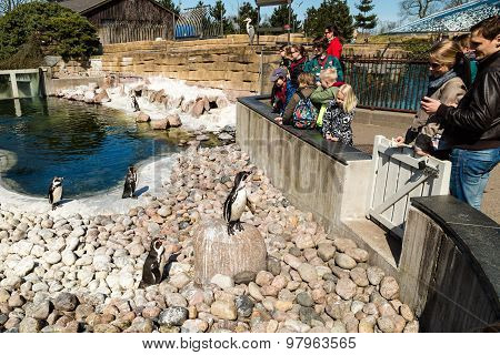 Penguins In Copenhagen Zoological Garden
