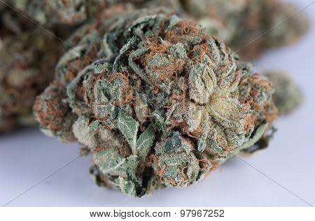 Khufu Hybrid Medicinal Medical Marijuana