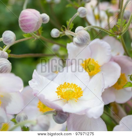 spring flowers, white, pink