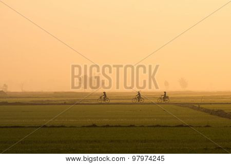 Three women ride bicycle in the rice field in early morning near Hoian, Vietnam