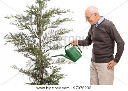 Casual senior watering a coniferous tree in a pot isolated on white background