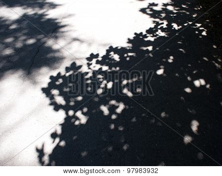 Fragment Of Asphalt Path