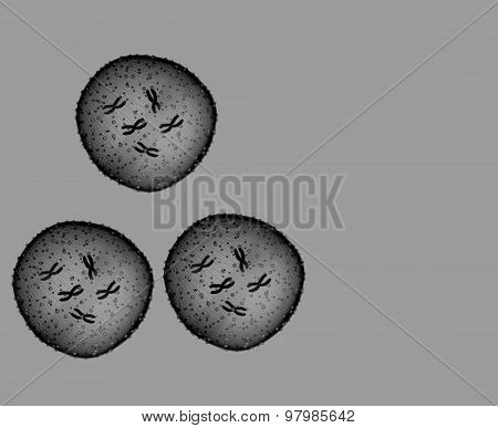 Three Microbe Black And White Seen In A Microscope In A Medical Office