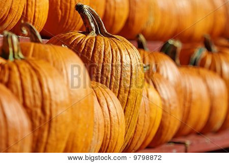 One, Special Pumpkin Always Stands Out