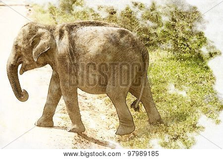 Elephant Calf Photo With Pictorial Effect