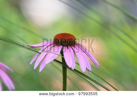 Daisy flower close up shot