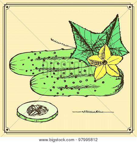 Sketch Cucumbers Set In Vintage Style