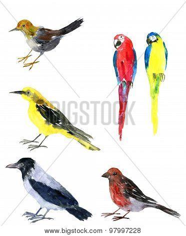 watercolor drawing bird