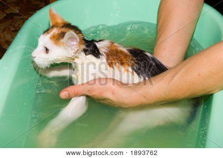 Water Procedures
