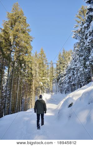 A man makes is way in the snow along a footpath in a snowy forest, winter season, vertical orientation