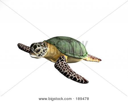 Great Turtle