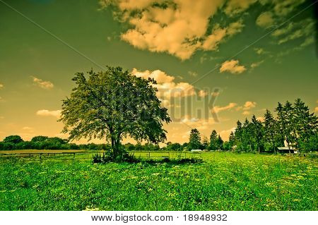 Rural scene with tree and fence at sunrise