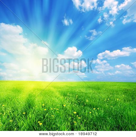 Green grass and blue sunny sky spring landscape. Perfect for backgrounds