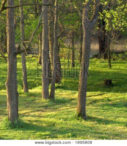 Backyard Shadows Trees