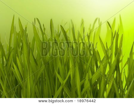 Beautiful nature background. Grass over blurred green backdrop.